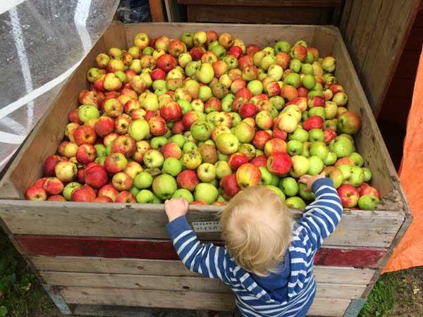 kist-vol-appels